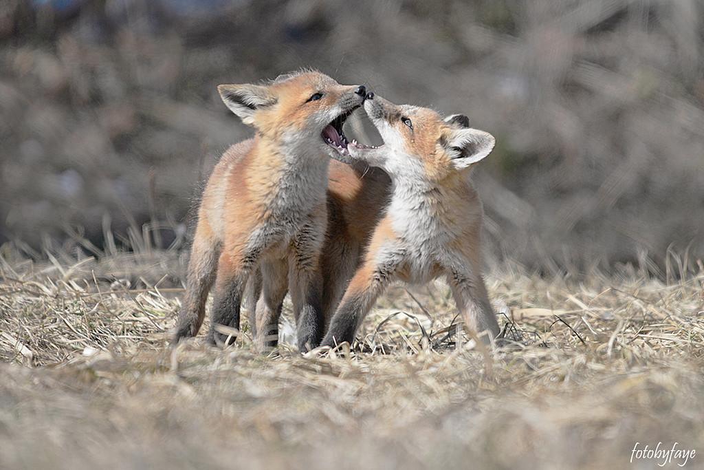 Sibling Rivalry! by fayefaye
