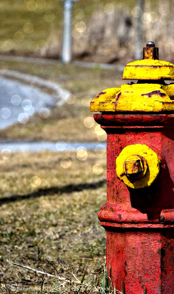 hydrant and bokeh by summerfield