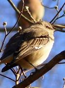 7th Jan 2011 - Bird With An Attitude...
