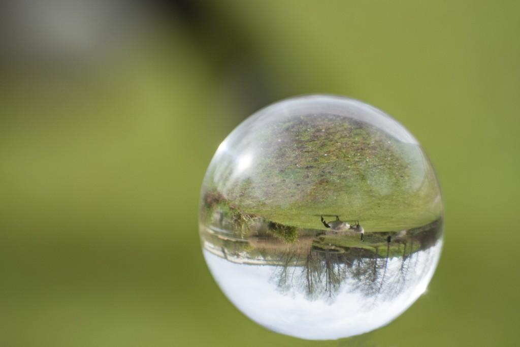Lensball for 30 days - Goosey goosey Gander! by bizziebeeme
