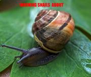 5th Apr 2019 - Snails.