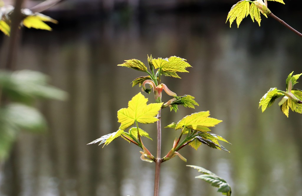 New Leaves by carole_sandford