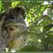 sleepy baby by koalagardens