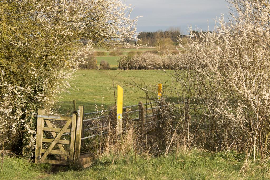 Fading blackthorn by shepherdman