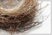 4th Apr 2019 - A Little Nest of Grass