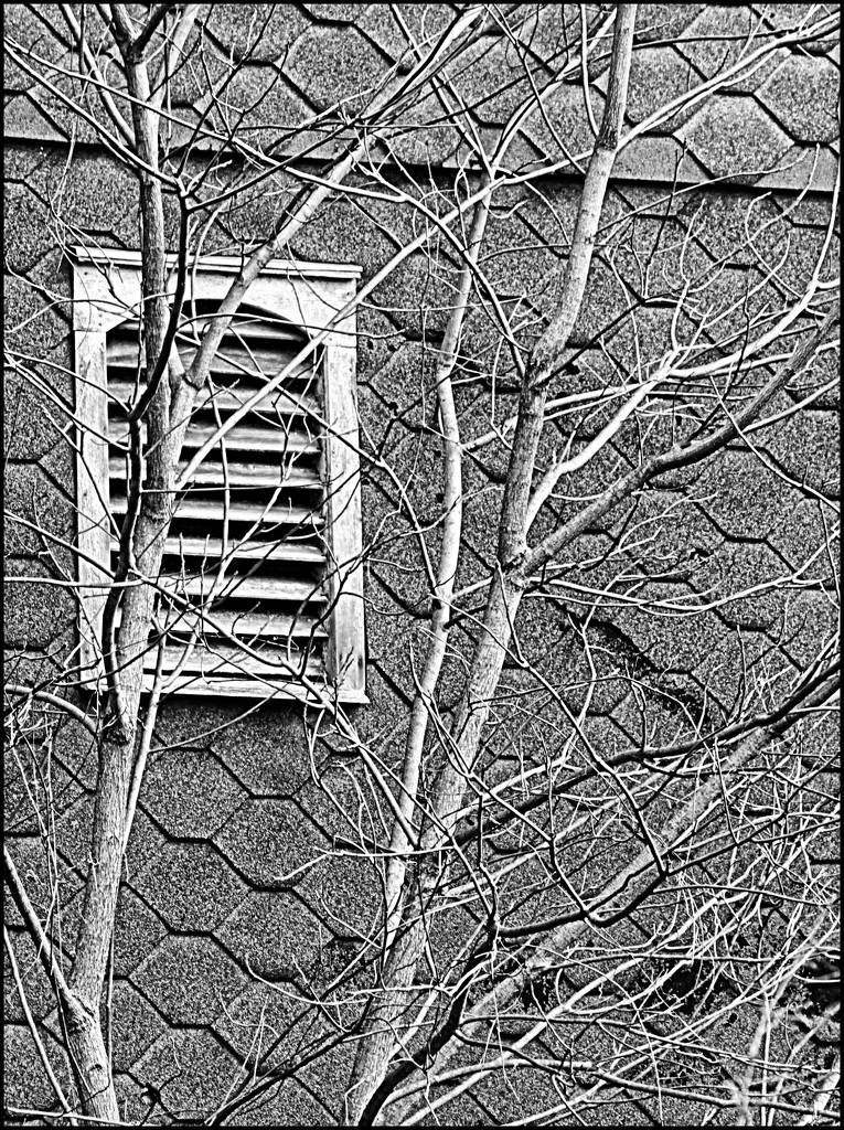 Slotted Window by olivetreeann