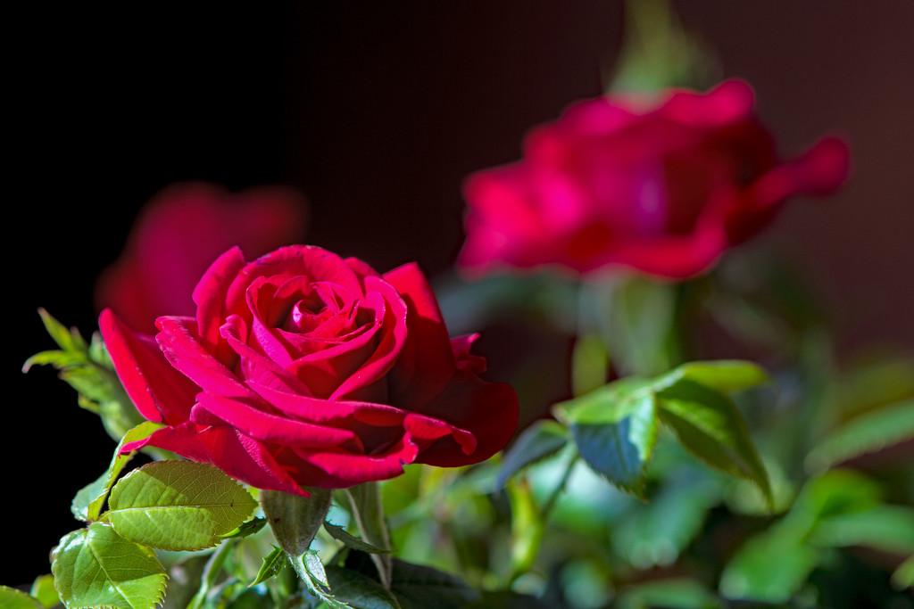 April Words - Flowers by farmreporter