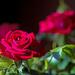 April Words - Flowers