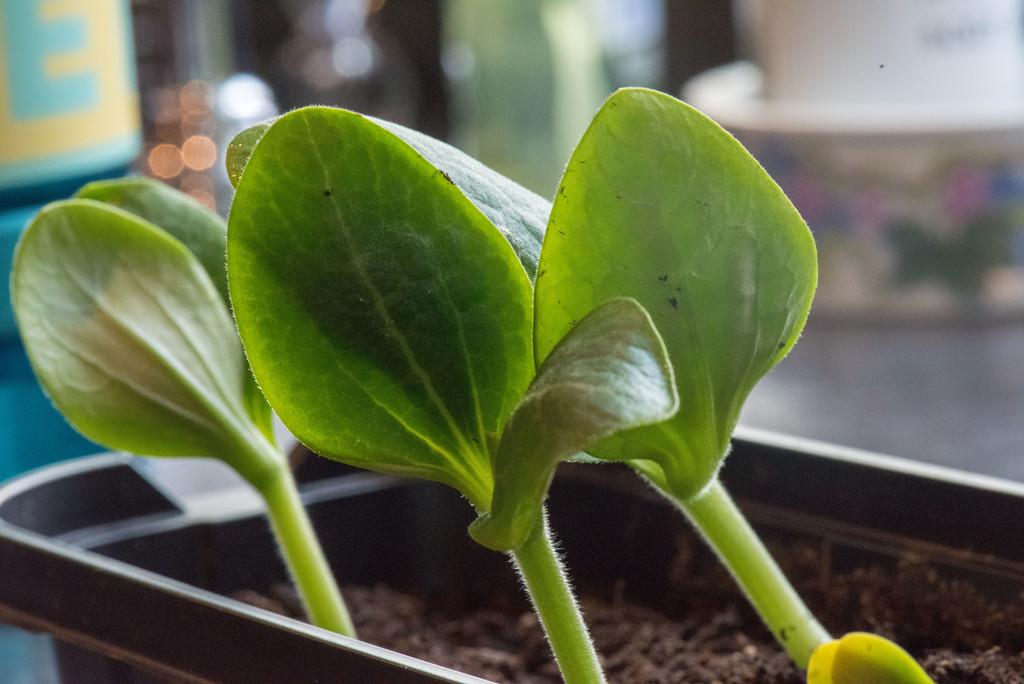 Seedlings! by dianen