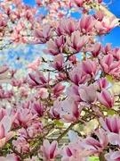 7th Apr 2019 - It Just Blooms