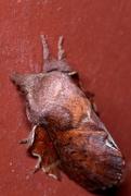 6th Apr 2019 - Door Moth