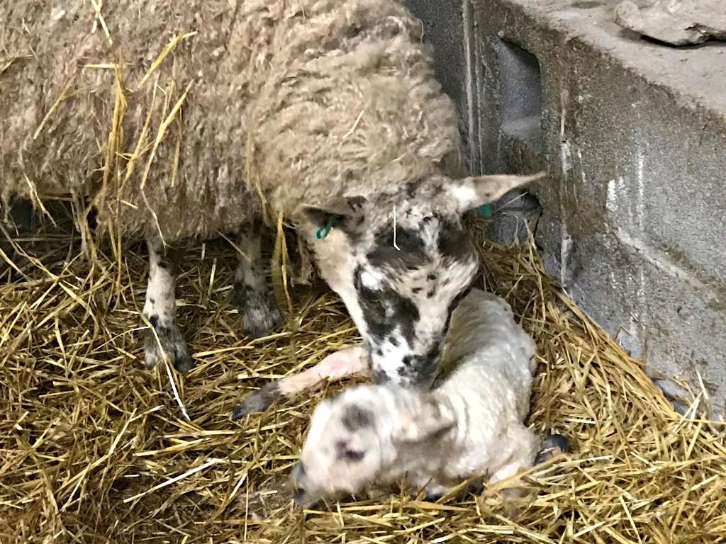 New born by callymazoo