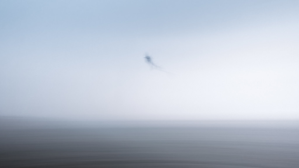 Ghost Bird by humphreyhippo
