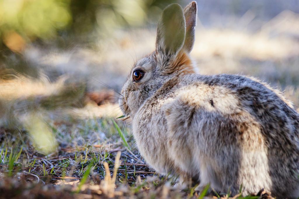 rabbit by aecasey