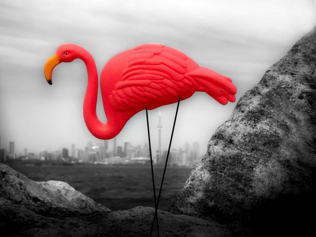 the big pink bird makes surprise visit to Toronto by northy