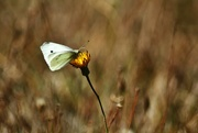 4th Apr 2019 - white and yellow