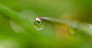7th Apr 2019 - Morning Dew