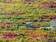 8th Apr 2019 - Autumn in the Winelands.