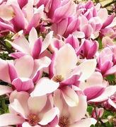 8th Apr 2019 - Blossom Into More