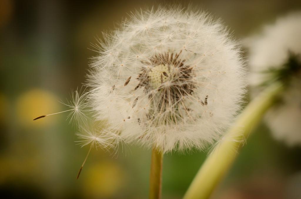 Wishing  by fbailey
