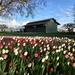 Springtime in Washington State