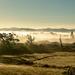 Misty Morning by yorkshirekiwi