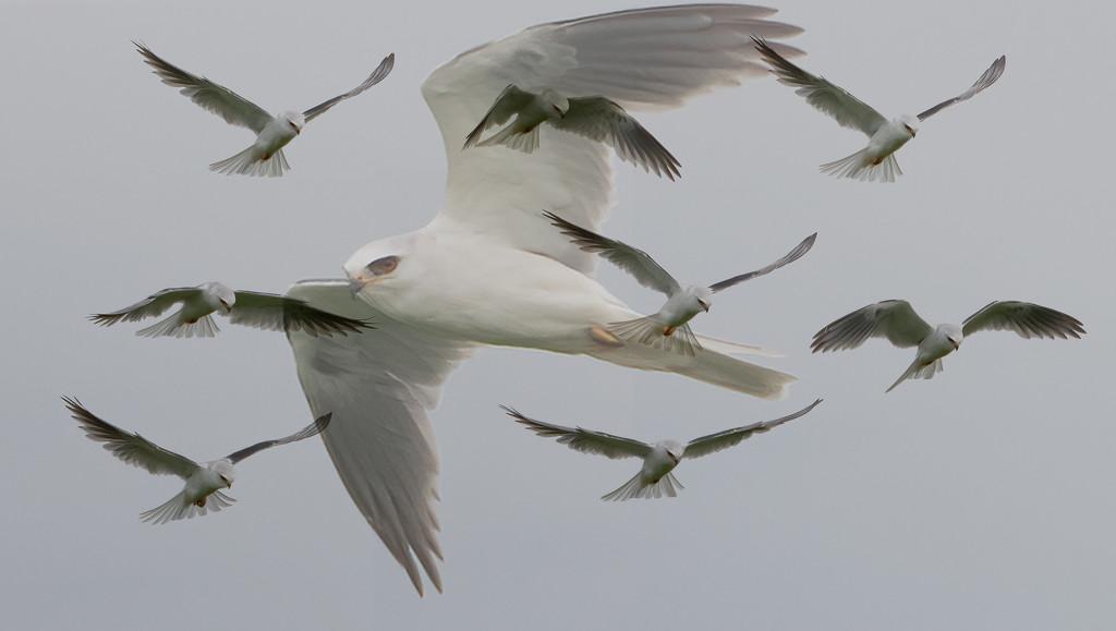Kite in flight! by mikegifford