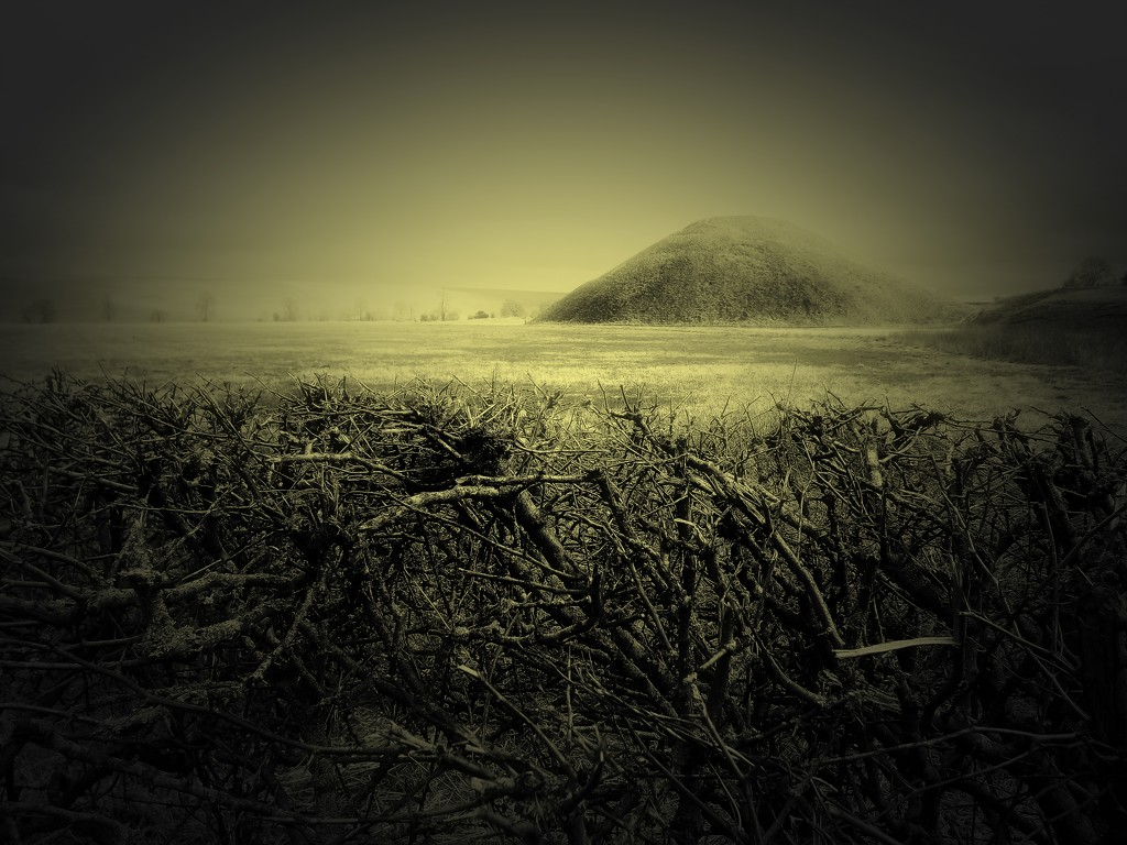 Hedge and Hill by ajisaac