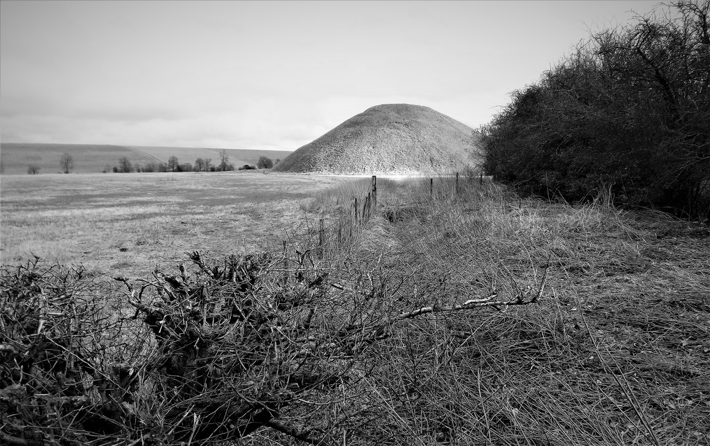 Hedge and Hill 2 by ajisaac