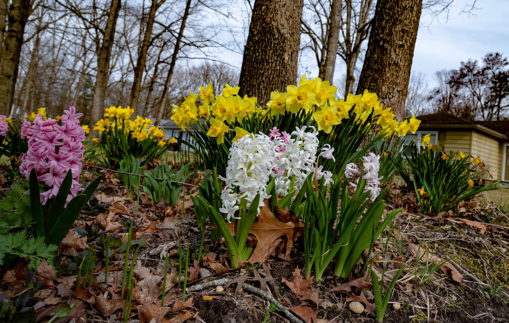 Spring Flowers II by hjbenson