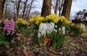 9th Apr 2019 - Spring Flowers II