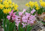 5th Apr 2019 - Spring Flowers