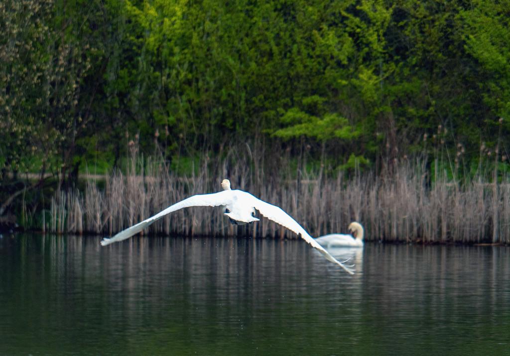 Glide. by tonygig