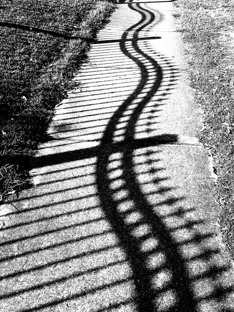 Shadow curves  by sugarmuser
