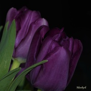 10th Apr 2019 - Tulips I bought!