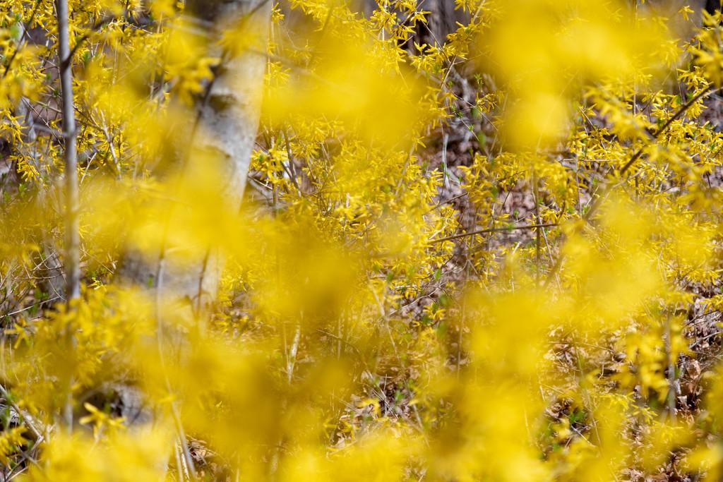 20190410-Yellow by hjbenson