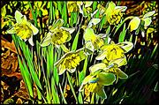 10th Apr 2019 - Dandy Daffodils