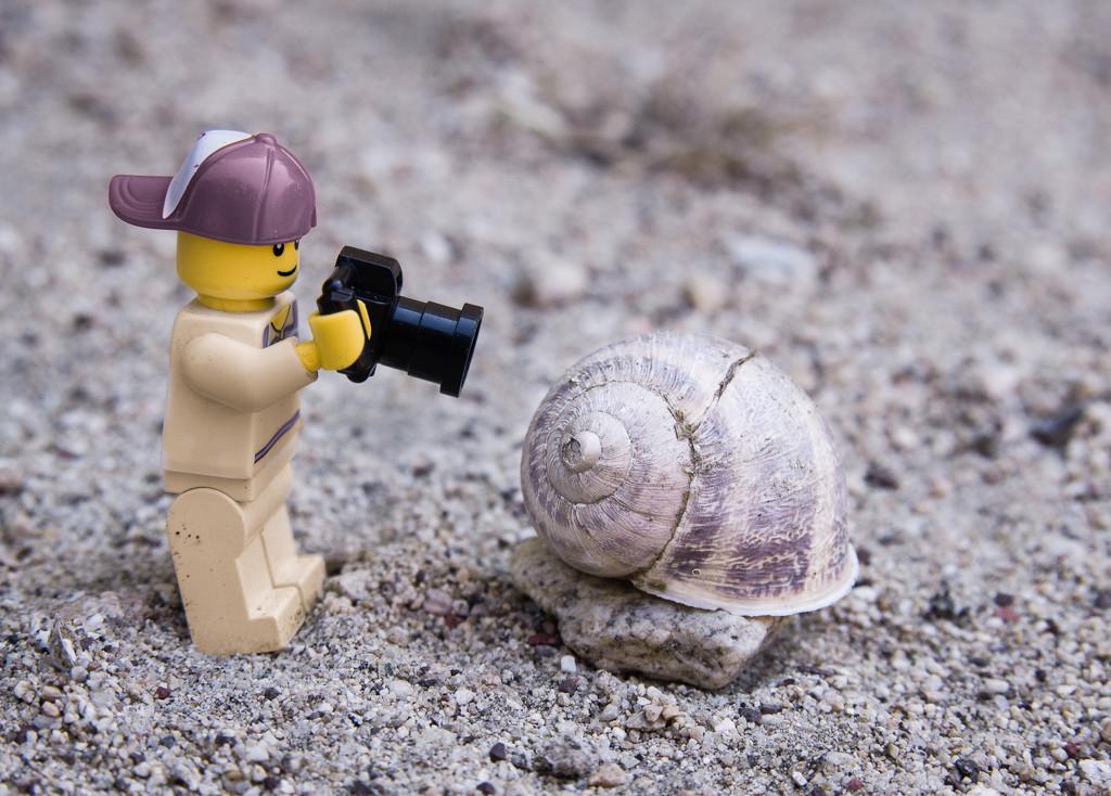 (Day 56) - Shellshocked by cjphoto