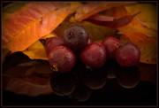 11th Apr 2019 - Autumn Colours