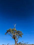 11th Apr 2019 - Tree on the skyline