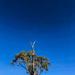Tree on the skyline
