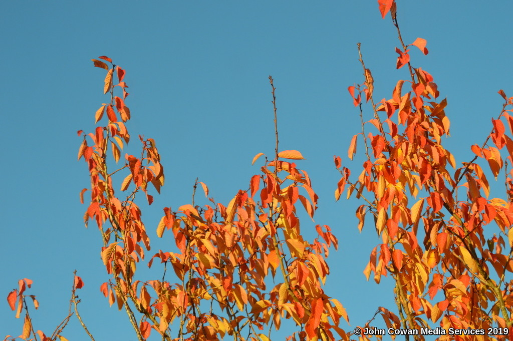 Red Leaves and Blue Sky by motorsports