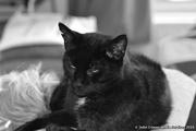 16th Apr 2019 - Max on cushion