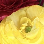 11th Apr 2019 - Bouquet Flower 2