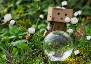 9th Apr 2019 - Danbo racing to make a daisy chain!
