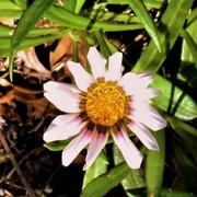 12th Apr 2019 - Tiny Flower ~