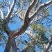 Tree by kgolab