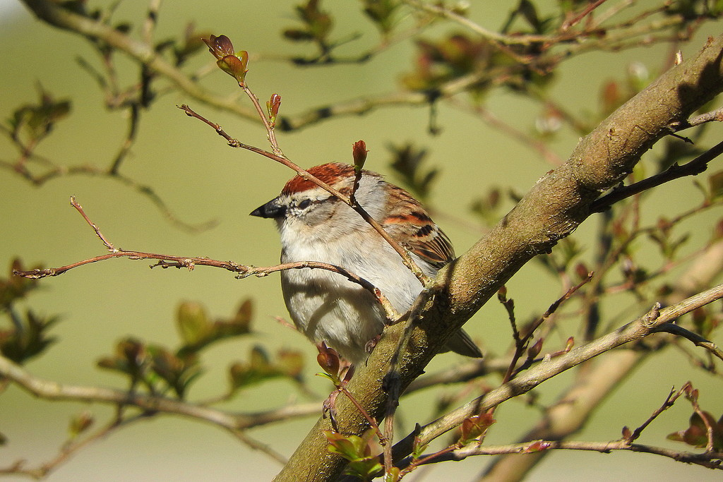 Little sparrow in my tree, come and sing to me by homeschoolmom
