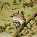 Little sparrow in my tree, come and sing to me