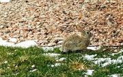 11th Apr 2019 - Rabbits Everywhere